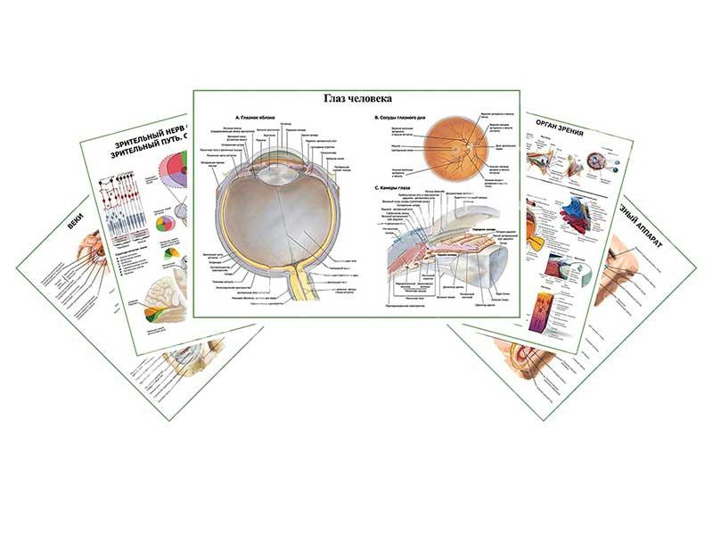 Комплект плакатов для кабинета офтальмолога глянцевый А1/А2